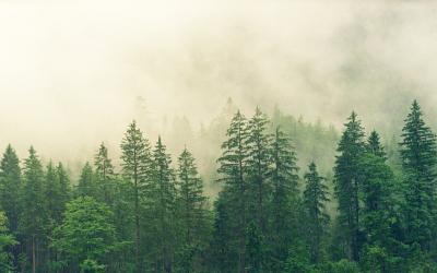 FSC Ein Siegel zum Schutz der Wälder - Interview mit Dr. Uwe Sayer