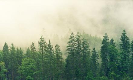 <p><span style='font-size:18px;'>FSC</span> <br />Ein Siegel zum Schutz der Wälder - Interview mit Dr. Uwe Sayer</span></p>