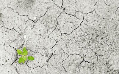 Agrargipfel In Brüssel Der Meilenstein der Julia Klöckner – Ein Desaster für das Klima