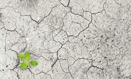 <p><span style='font-size:18px;'>Agrargipfel In Brüssel</span> <br />Der Meilenstein der Julia Klöckner – Ein Desaster für das Klima</span></p>
