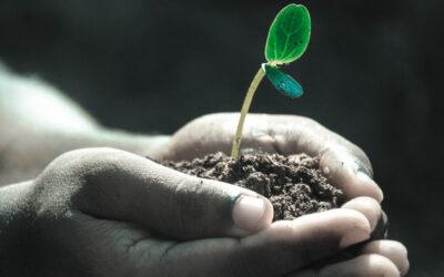 United Kids Foundations Wald Zukunft pflanzen!