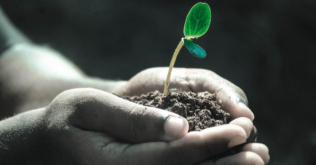 oeding print unterstützt United Kids Foundations Wald Zukunft pflanzen!
