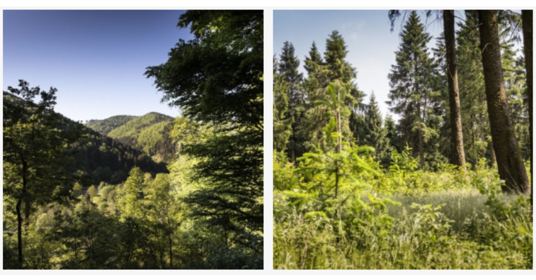 Naherholung Harz