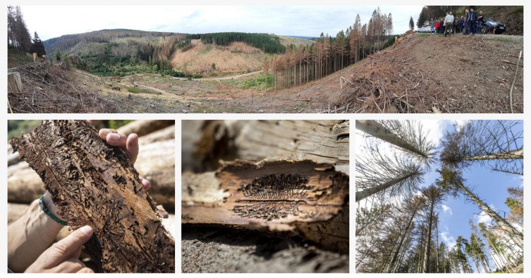 Harz-Wald in Gefahr