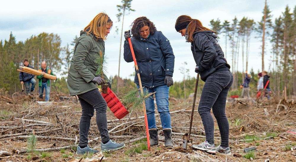 Waldsetzen in Österreich, Aktion Waldsetzen jetzt